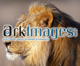 Ark Images | Click to Learn More + Share
