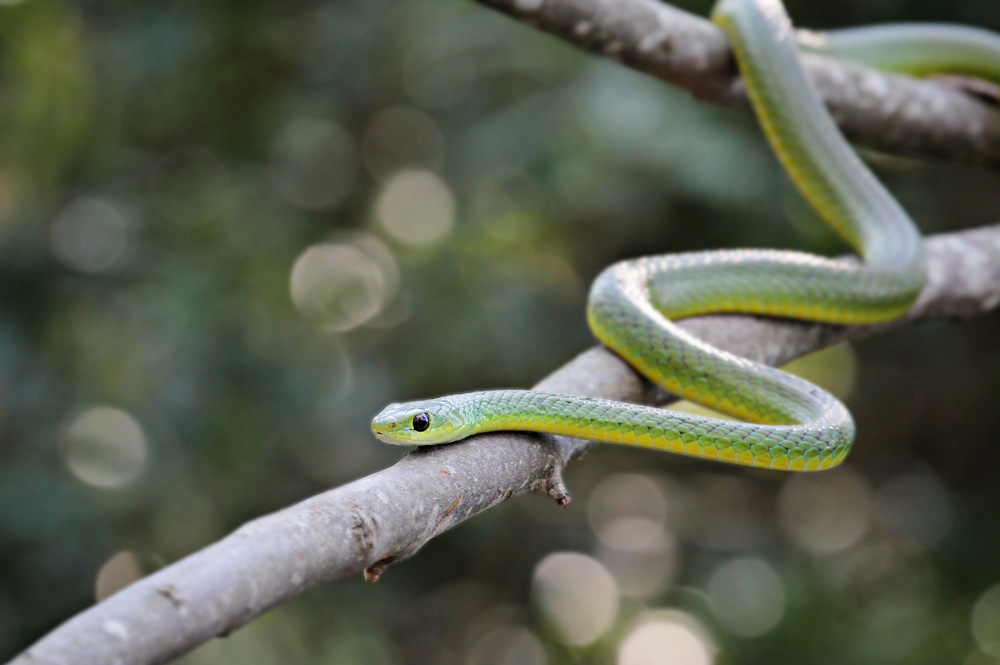 Ibis Projects/ Durban Pest Control Services | News/ Blog - Snakes